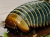 Pill Millipede