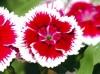 flower2-nandihills-2